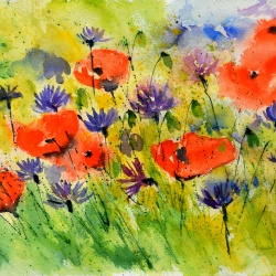 Poppies and cornflowers watercolor
