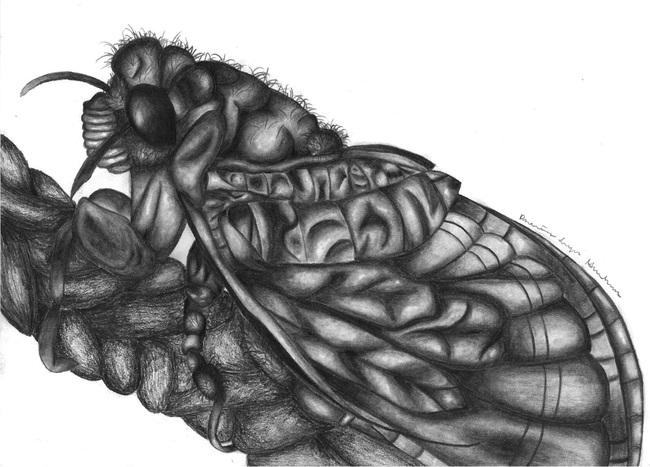 The Summer of Cicadas