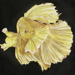 Fighting Fish Yellow