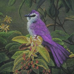 Purple Plumage
