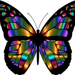 THIS   ONE   IS   OF   A   BUTTERFLY