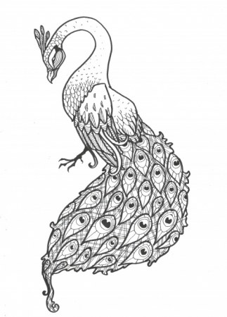 Pencil drawings 30 peacock print